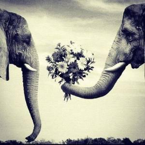 elephanelove